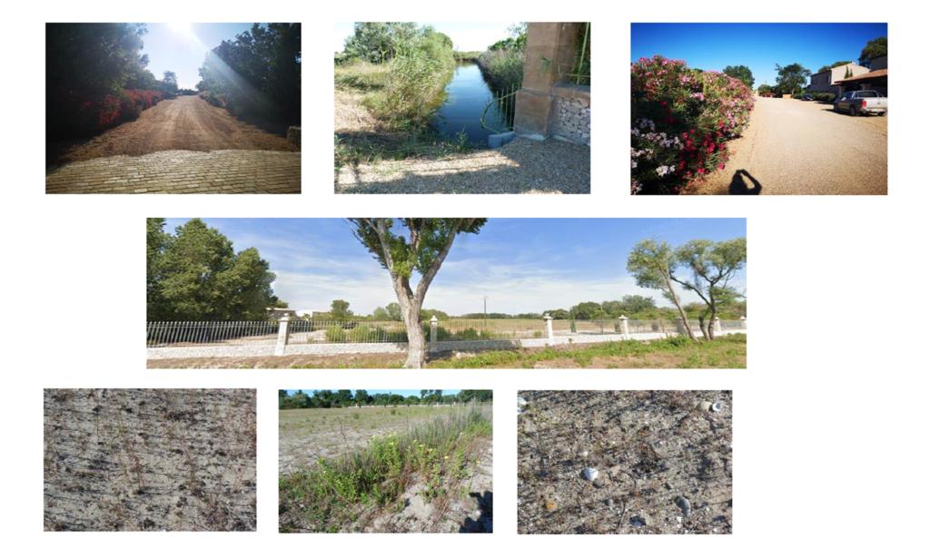 Visite sur site pour vérification des espèces pouvant être impactées par le projet